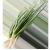 Купить Зеленый лук
